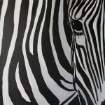 30x30 Zebra
