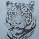 1a Tiger DIN A4